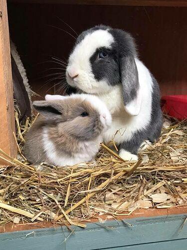 Cutie pie💛   Cute animals, Baby animals, Cute bunny