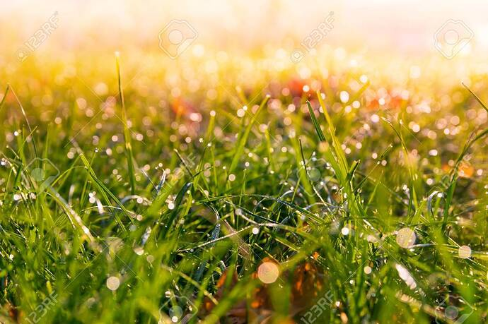 46675655-dewy-meadow-grass-at-dawn-warm-colors-background-