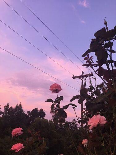 Image result for flowers aesthetic wallpaper